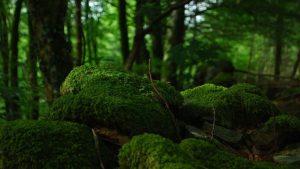 Estenfelder Wald